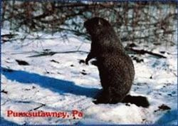 Postcard - Groundhog Snow Scene