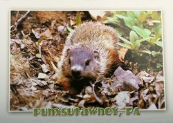 Postcard- Punxsutawney Phil Gray Background