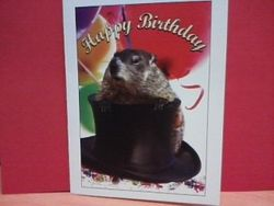 Punxsutawney Phil Birthday Card - PhotoIllustrated