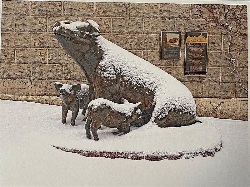 Penn State Centennial Pigs Postcard Nittany Lions (PSU)